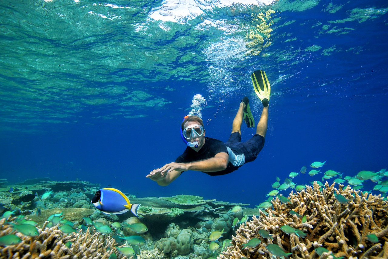 Snorkelling with fish, Anantara Kihavah Villas
